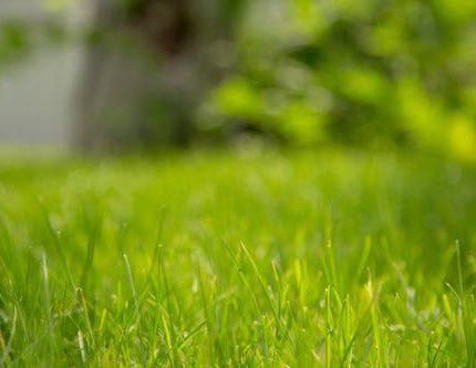 白蟻不會無故消失,各種害蟲專業驅除